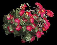 Flores vermelhas em png