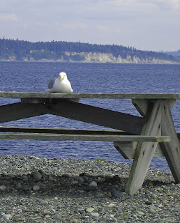 Seagull, washington, picnic, park, humorous
