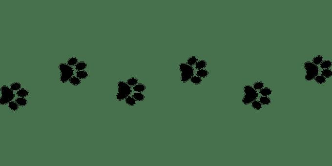Подай лапа! Българска Национална Платформа за Спасяване на Животни