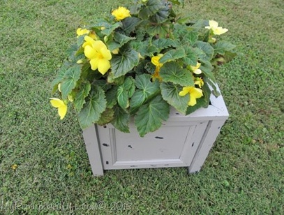 Pot bunga yang terakhir ini terbuat dari pintu kabinet bekas.