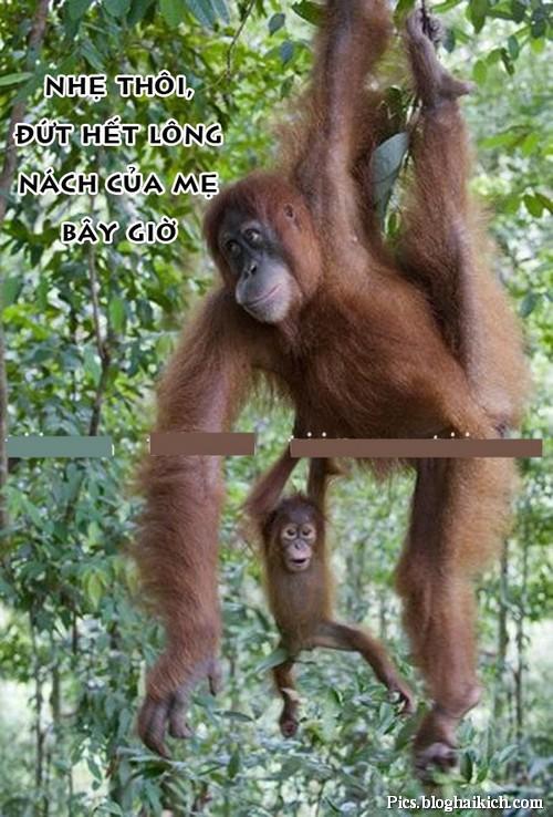 Khó đỡ với ảnh động vật ngộ nghĩnh, hài hước