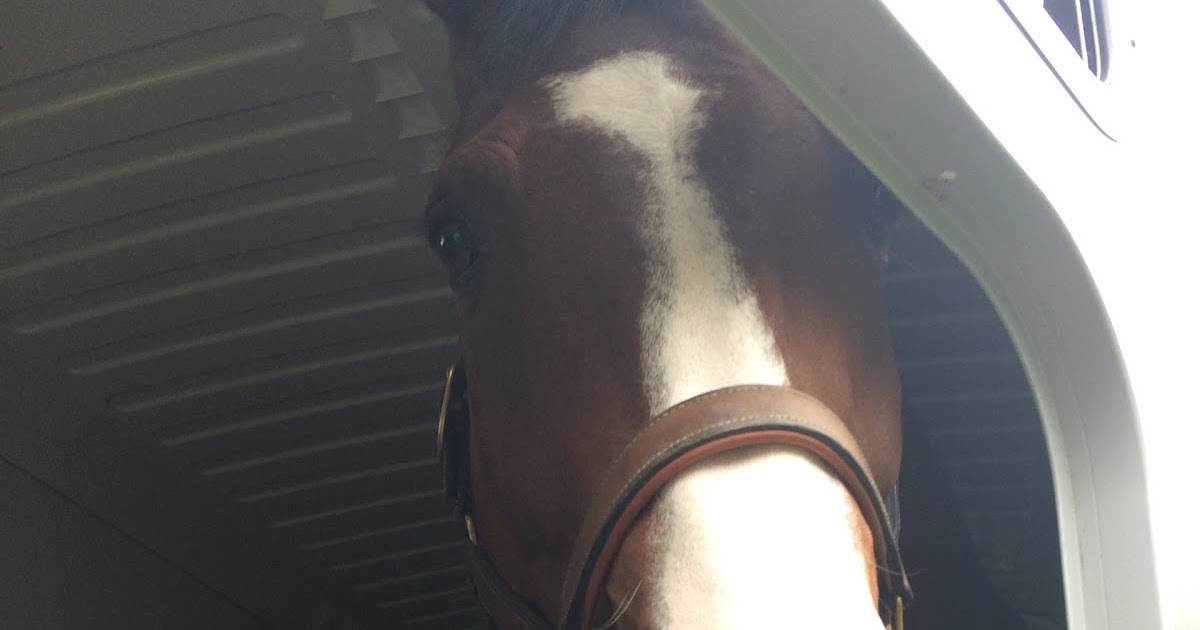 Roosa's Horsey Life: Preview