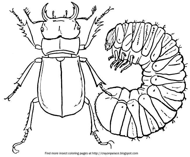 Stag Beetle Species Coloring Pages : Best Place to Color  |Stag Beetle Coloring Page