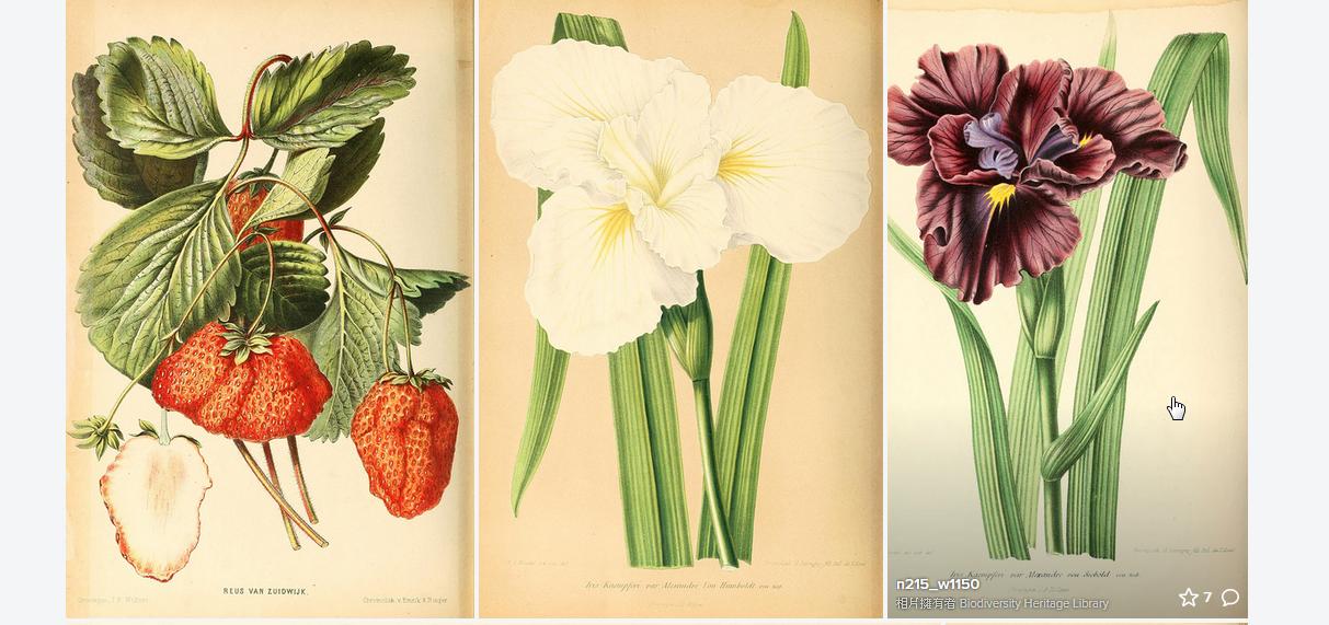 十多萬張精美博物學手繪插圖,自然歷史老師免費使用圖鑑圖片