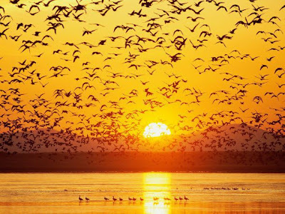 Keindahan Alam Di Kala Mentari Terbenam