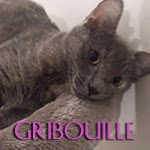 icone gribouille
