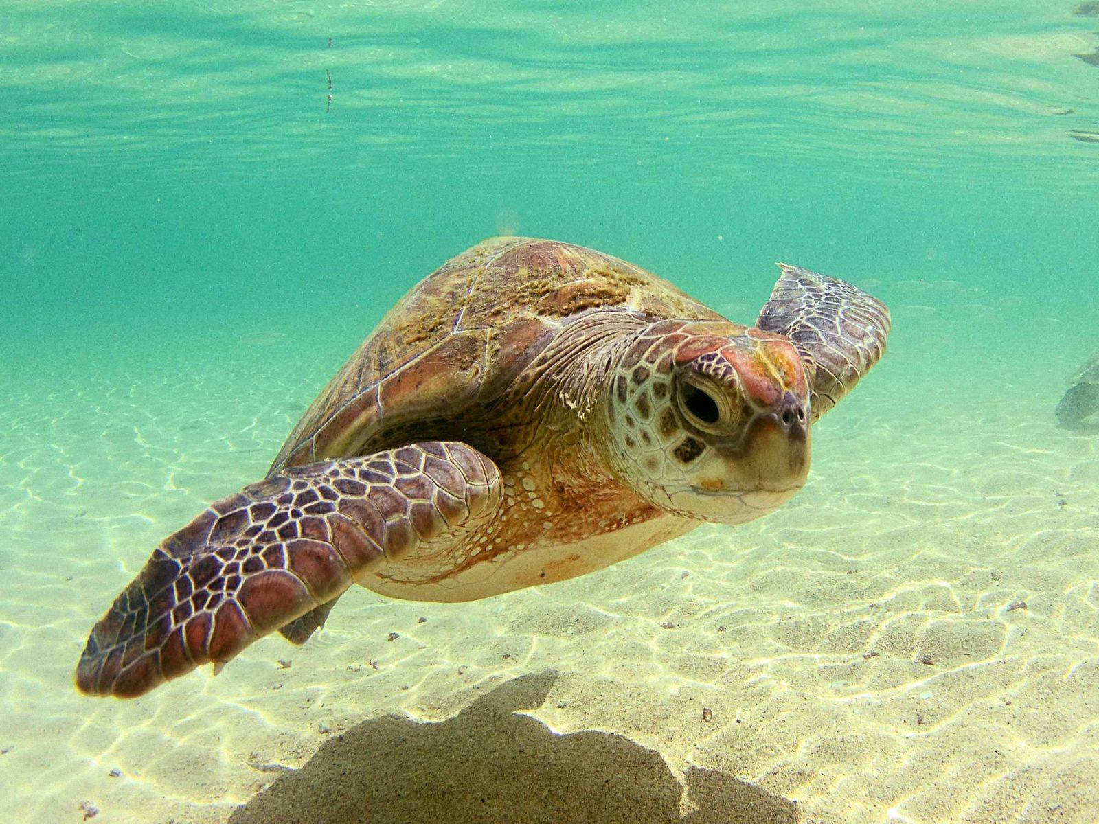 Beautiful Wallpapers: Turtle hd wallpaper