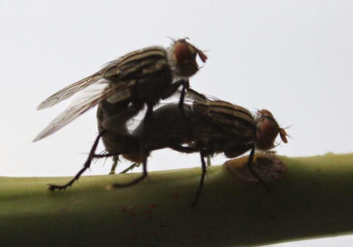 Memotret Lalat Beradegan XXX