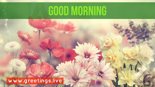 Beautiful white pink red light yellow white flowers greeting on Good Morning Time AM