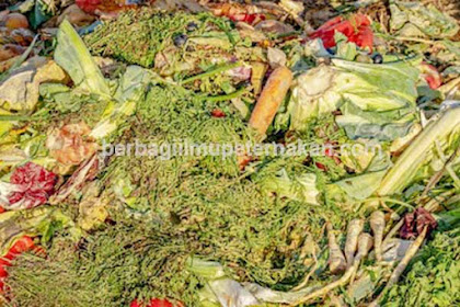 Silase Limbah Organik Pasar Sebagai Pakan Alternatif Ternak Ruminansia