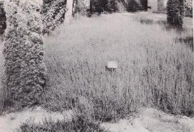 Future Plants by Randy Stewart: Ephedra