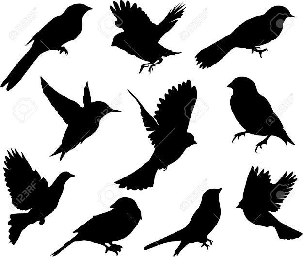 Set Birdsvector Stock Vector