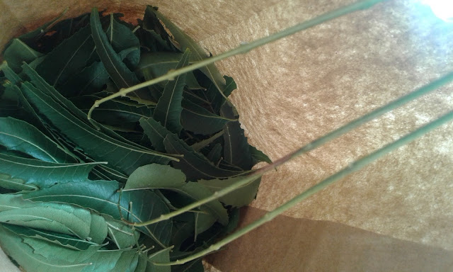Drying Neem Leaves without a Dehydrator tropical permaculture