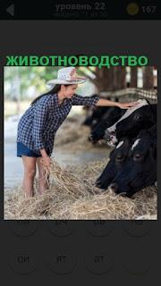 женщина производит уборку около коров на ферме