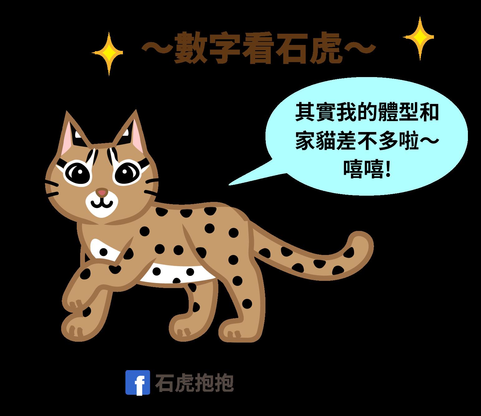[石虎]石虎小學堂1.2.3 - 石虎抱抱 Hug Taiwan Leopard Cat