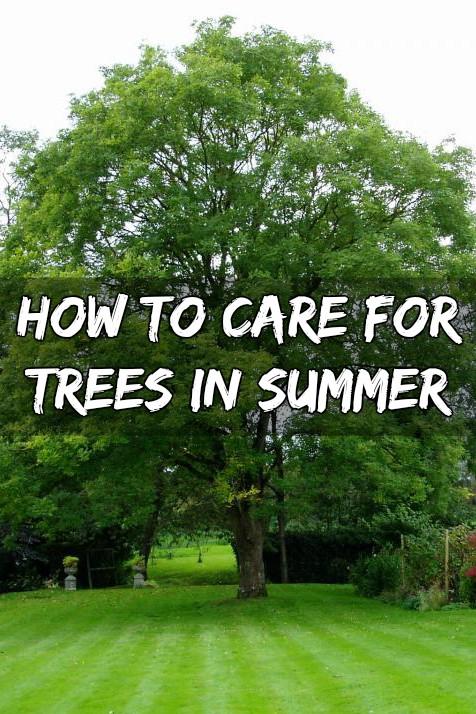 Summer Gardening Tips For Beginners Alternative Gardening