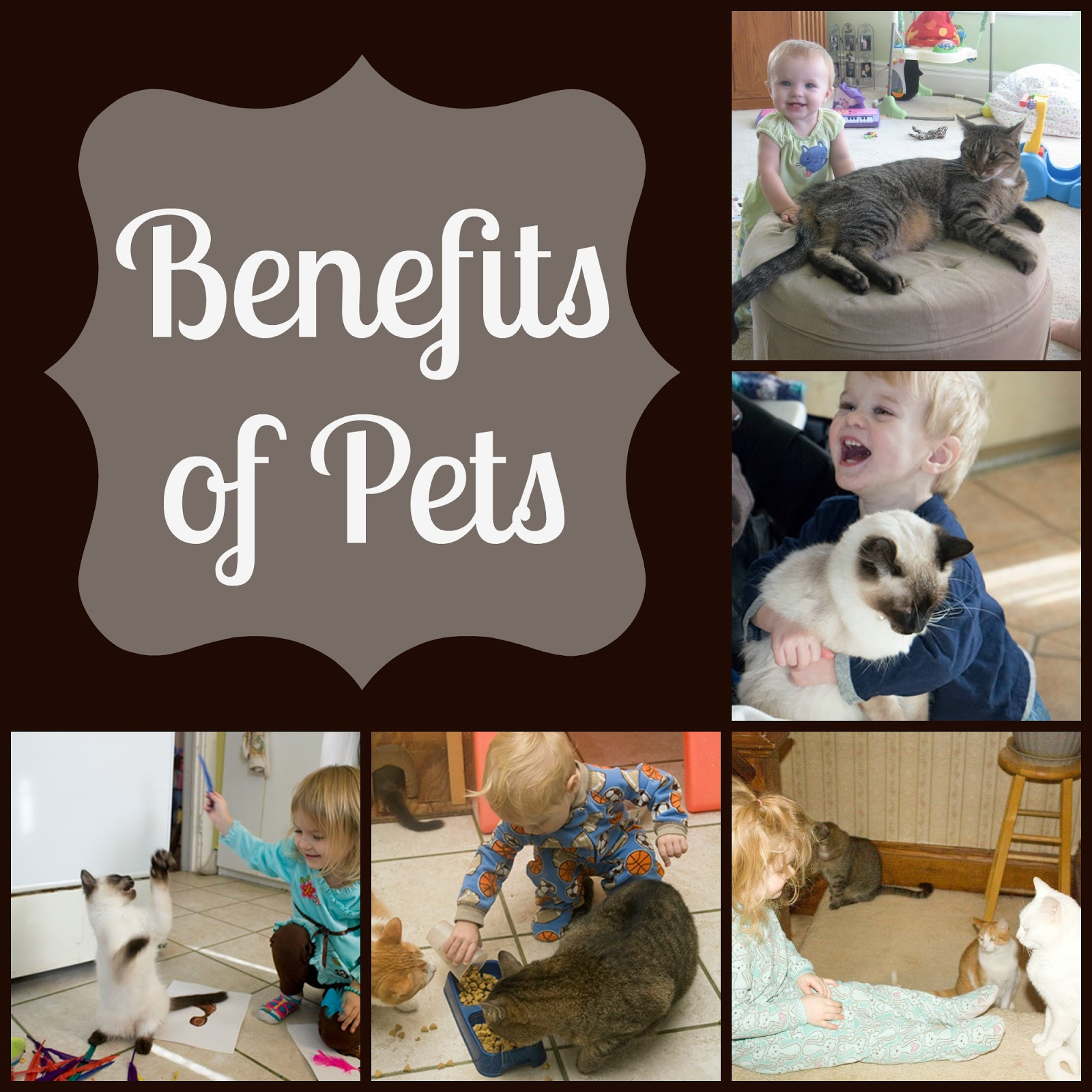 Farm Fresh Adventures: Benefits of Pets: Life with Moore Babies