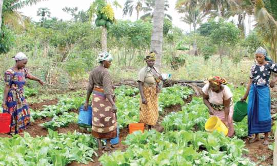 Bongo district smallholder farmers exploit indigenous farming technologies