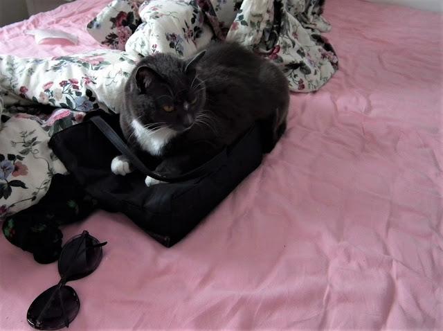 kissa, musta, Pinkku, sänky