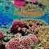 Tentang Terumbu Karang & Metazoa ( Biologi )