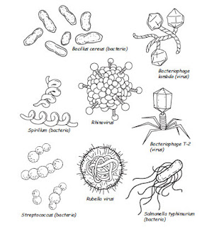1000+ images about Germs Lesson on Pinterest