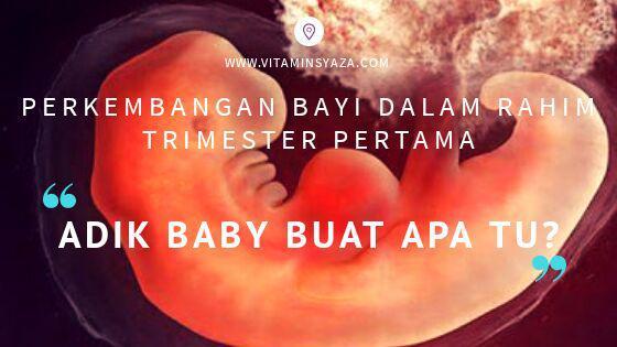 perkembangan bayi semasa kehamilan trimester pertama
