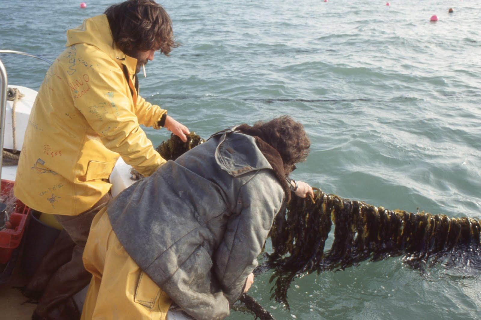 Whole Lotta poissons datant sites de rencontres pour les éducateurs