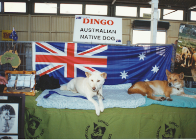 Dingoes Win Best in Show at Sydney Royal