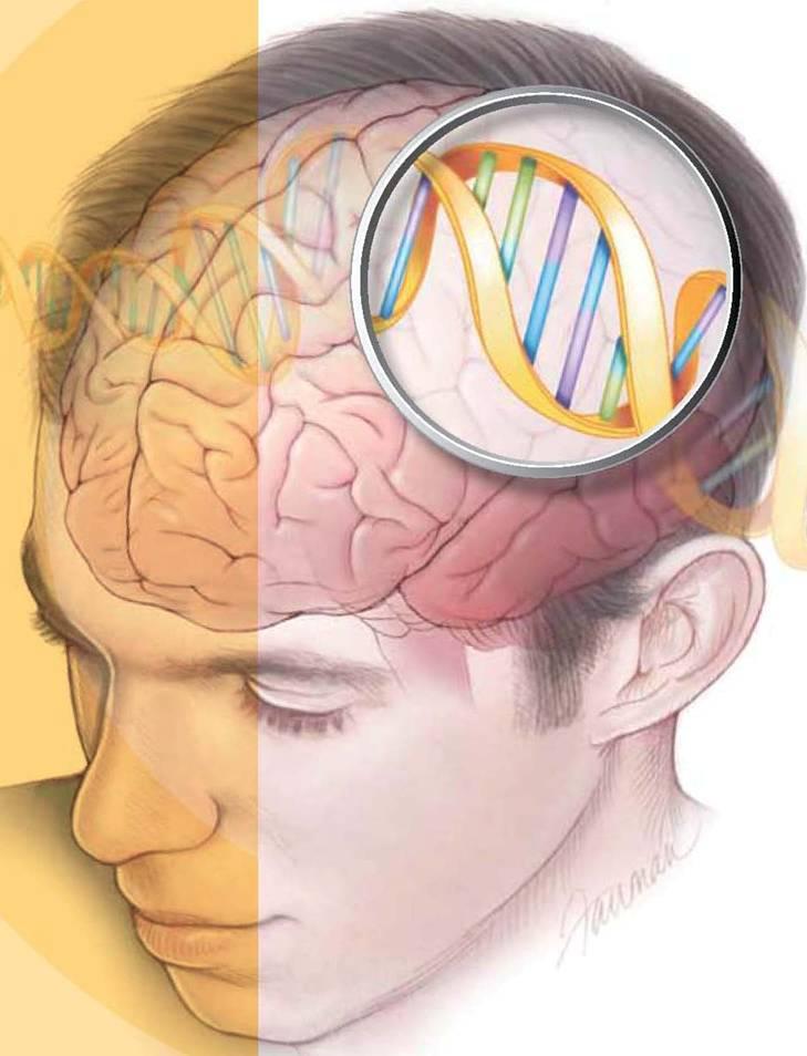 pierderea în greutate creier sincronizare