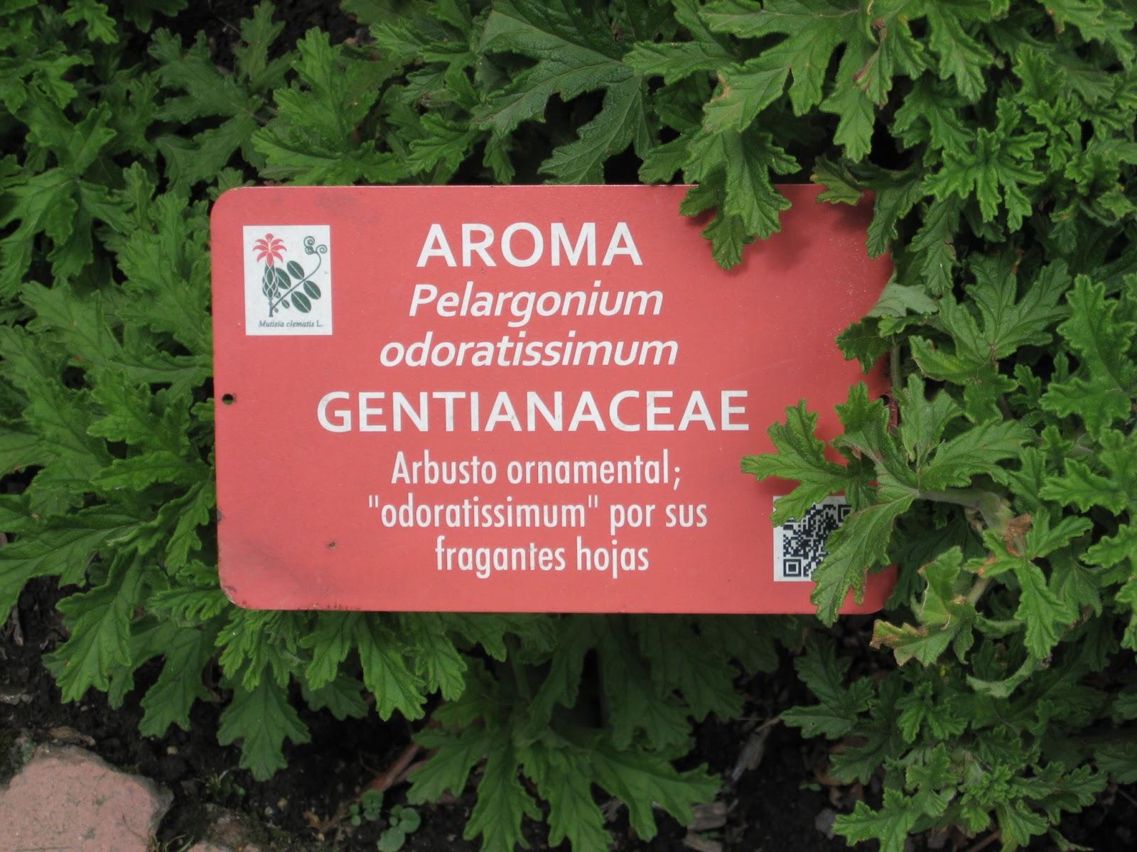 Licuc artemisa o altamisa esa es la confusi n for Jardin botanico medicinal