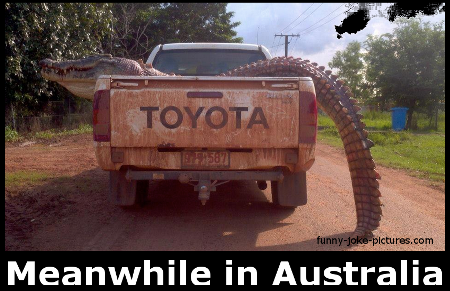 Funny Meanwhile In Alligator Australia Joke Photo