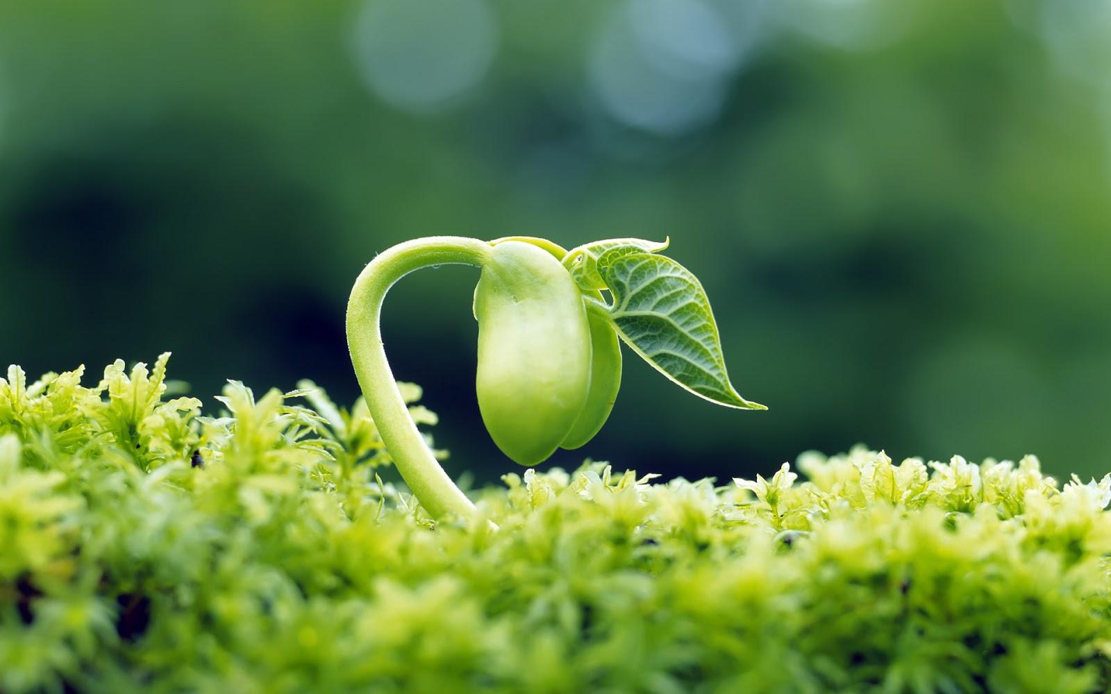 hình nền mầm cây lá tượng trưng cho bắt đầu của sự sống