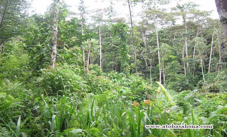 Keanekaragaman Hayati di Hutan