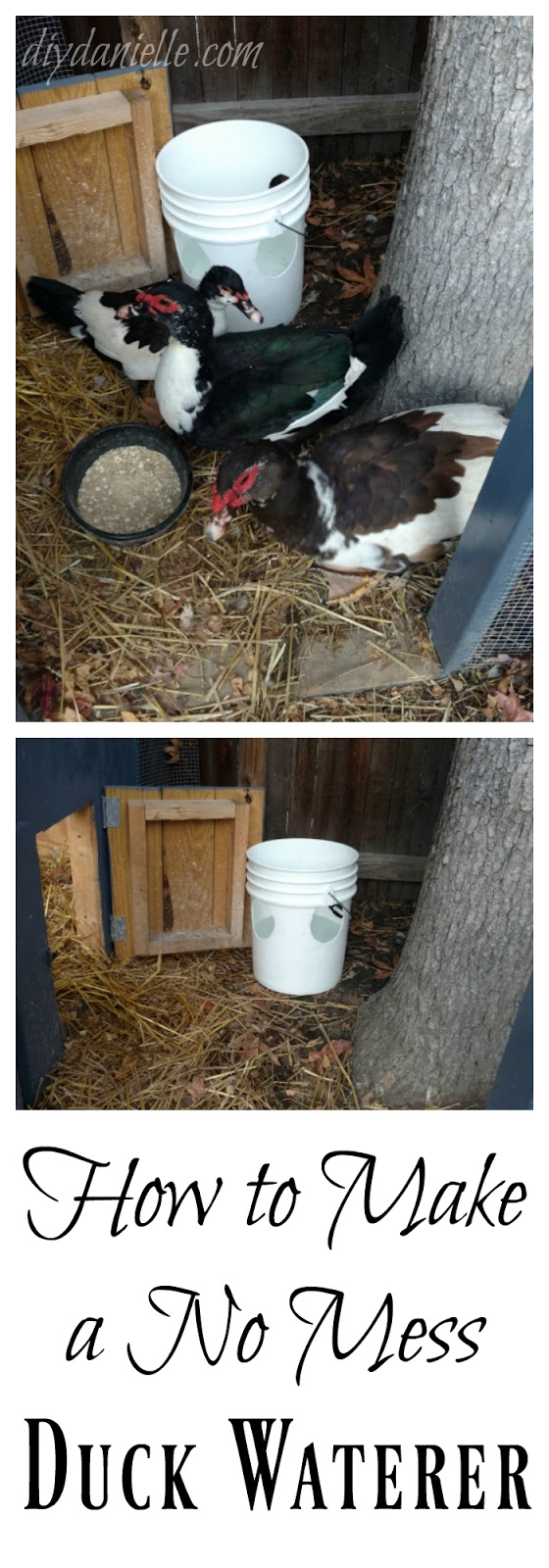 How to make a no mess duck waterer.