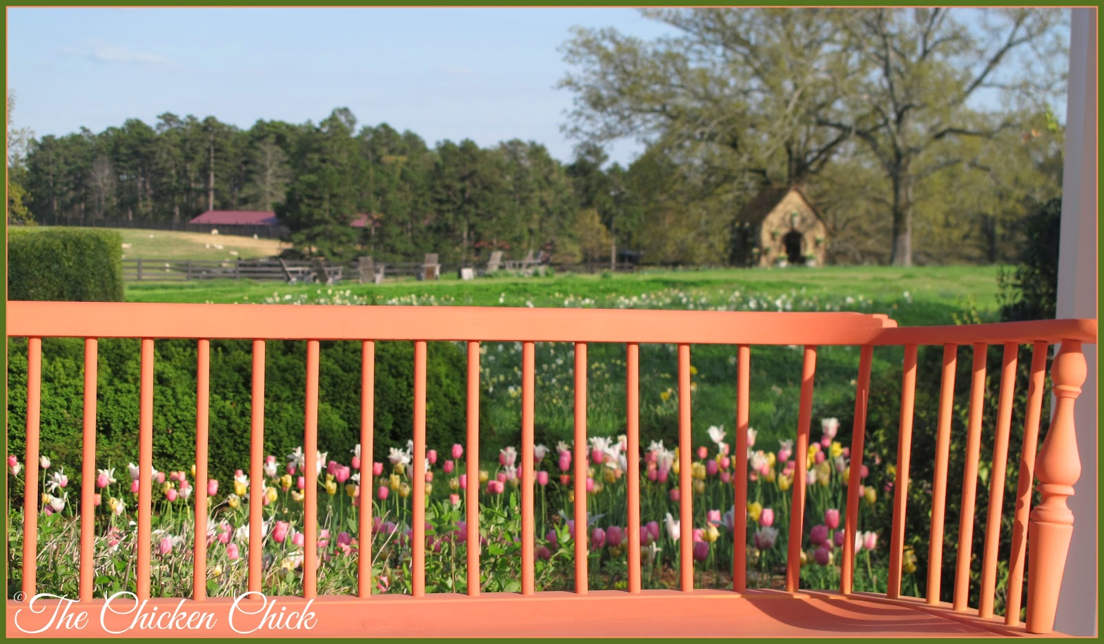 This view is from the porch of the Garden home, looking out over the sheep pasture, the waterfowl park and Poultryville (the red roofed structure in the distance).