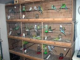 Kandang Yang Sesuai Untuk Ternak Lovebird