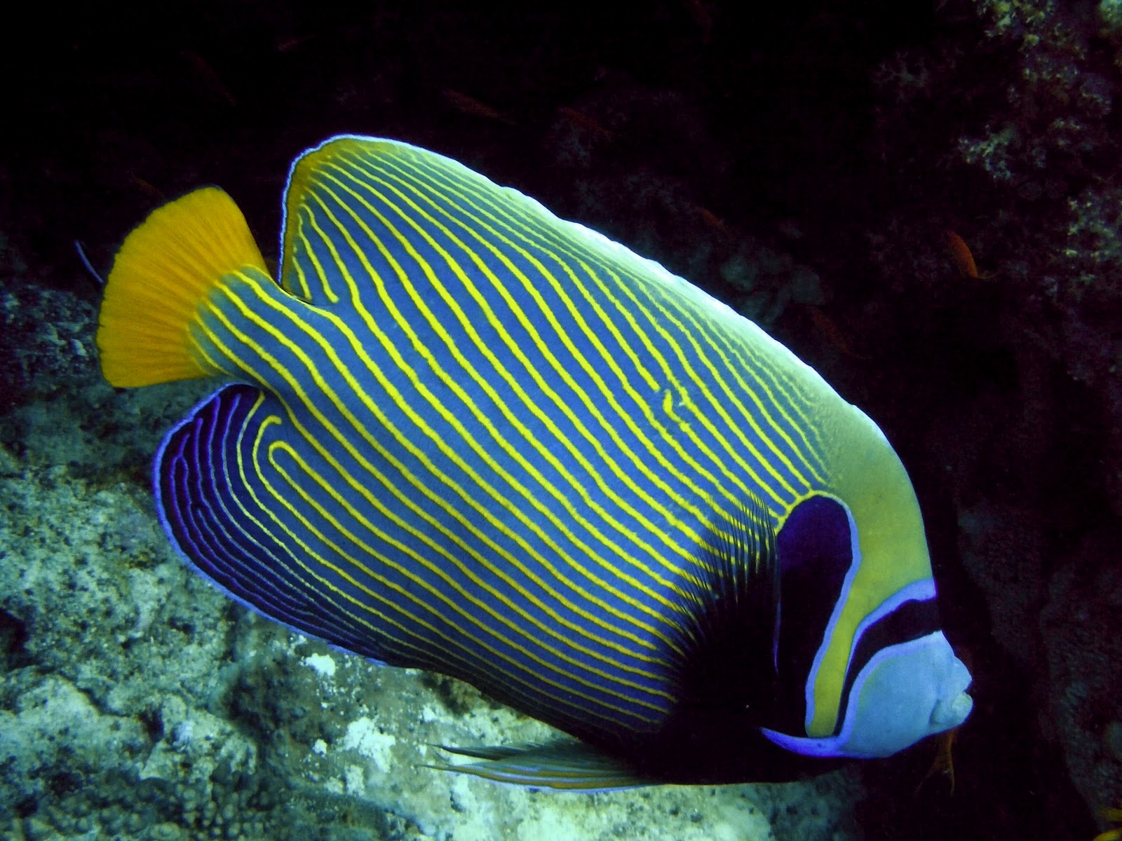 Angelfish has not yet fill the personality profile