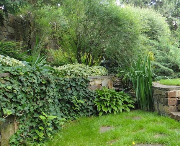 Хоста и садовый плющ у подпорной стенки