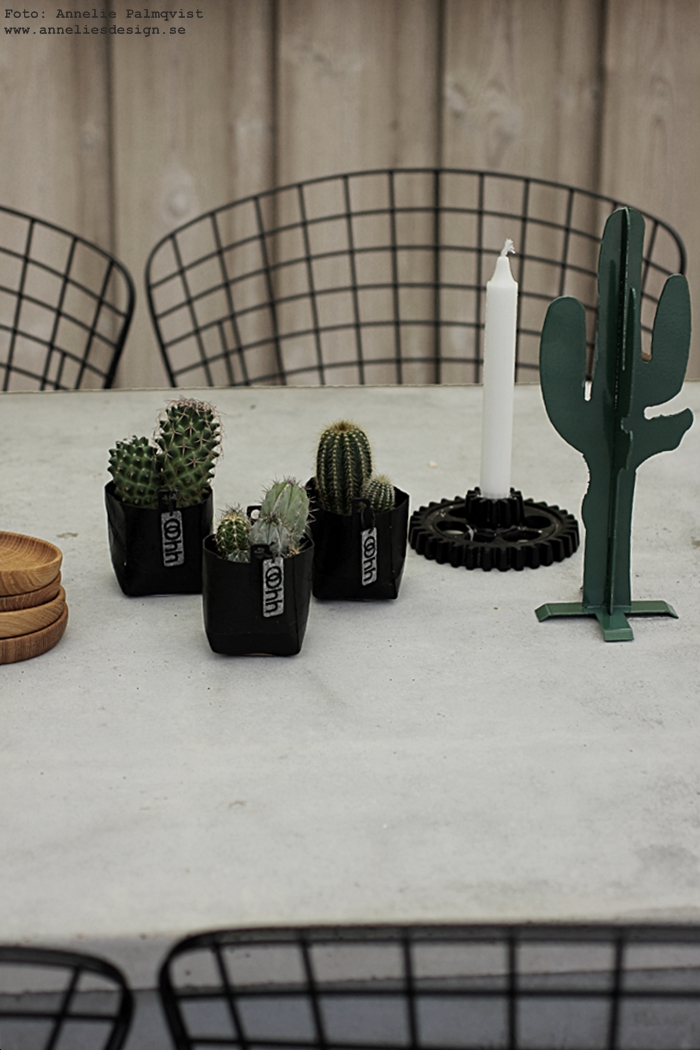 kaktus, kaktusar, minikaktus, minikaktusar, kruka, krukor, Oohh, fikon, fikonträd, uteplats, lanterna, lanternor, uteplatsen, trädäck, trädäcket, altan, altanen, pergola, kaktus prydnad, inredning, betongbord, betong, stolar, matplats, utemöbler, jotex, ljusstake kugghjul, house doctor, fat av ek, glasunderlägg, ek, fat, träfat, underlägg, annelies design, webbutik, webshop, nettbutikk, online,
