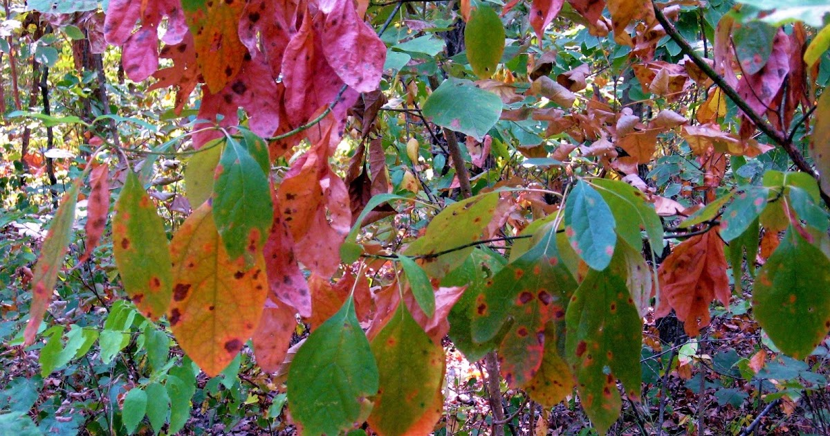 september colors