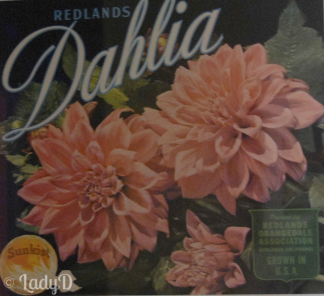 Dahlias: LadyD Books