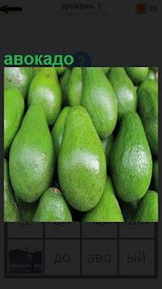 Несколько плодов зеленого авокадо лежат рядами