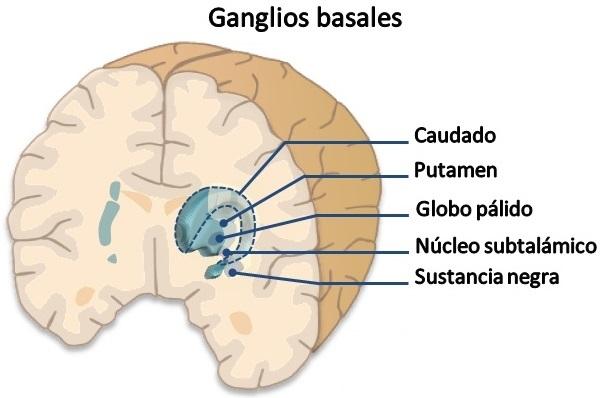 NEUROCIENCIAS DE LA CONDUCTA: Biopsicología de los trastornos ...
