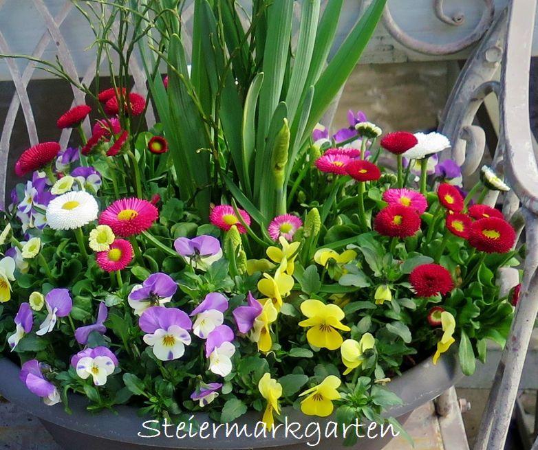 Frühlingsblumen-Steiermarkgarten