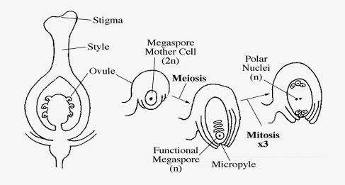 BIOLOGI Tingkatan 4 + Tingkatan 5: BIOLOGY FORM 5 NOTES