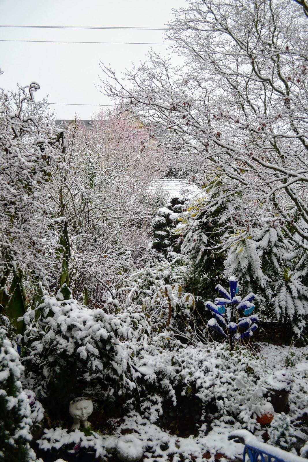 The Outlaw Gardener: I\'m No Longer Dreaming of a White Christmas