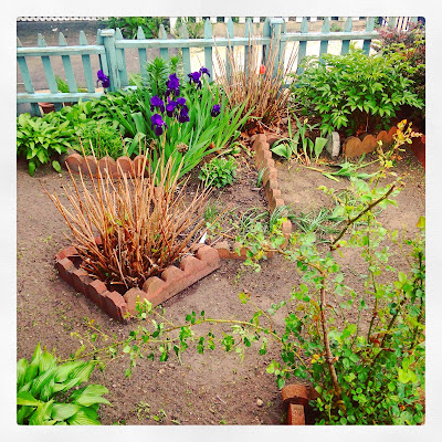 Urban Garden in Spring featuring irises