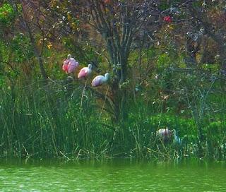 Grissom Wetlands