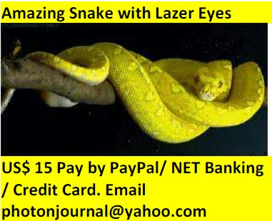 Snake and Solar Panel For Electricity book