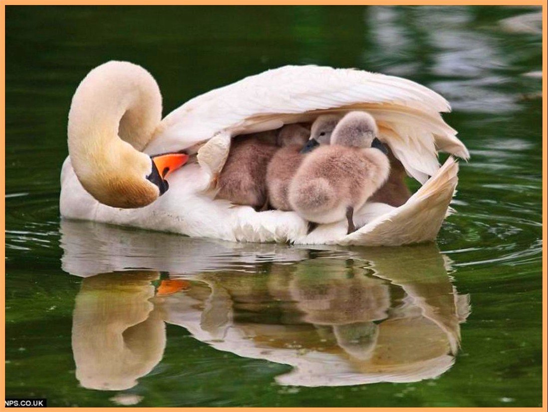 Welcome To Animal Cognizance Mother And Baby Animal Photograph Layout